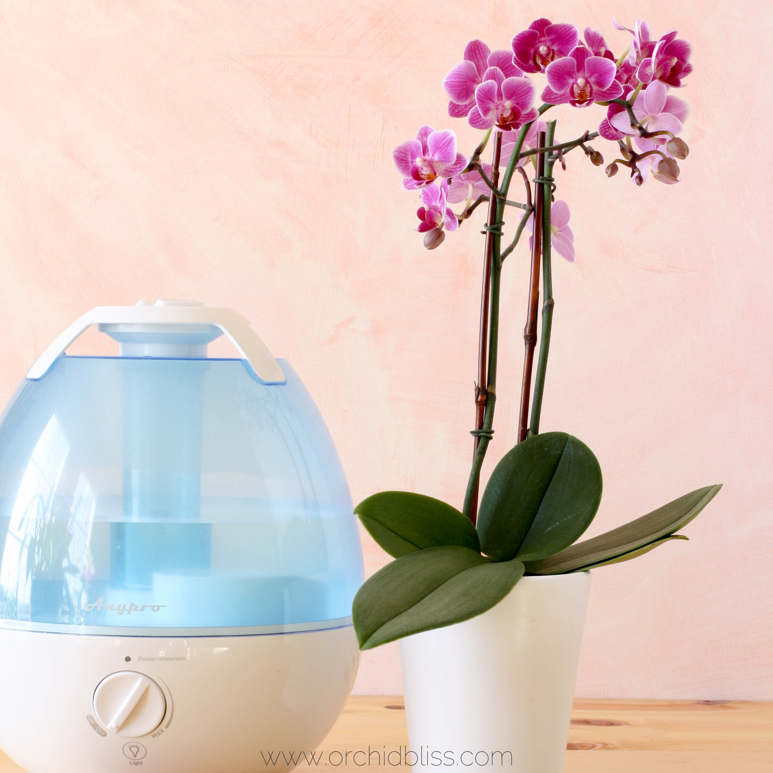 Vase for orchids gallery vases design picture how to increase humidity for happier orchids orchid bliss reviewsmspy reviewsmspy