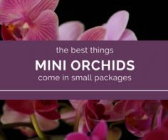 Mini Orchids Have It All Tons Of Flowers