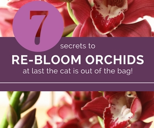 Learn How to Encourage Your Orchid to Flower