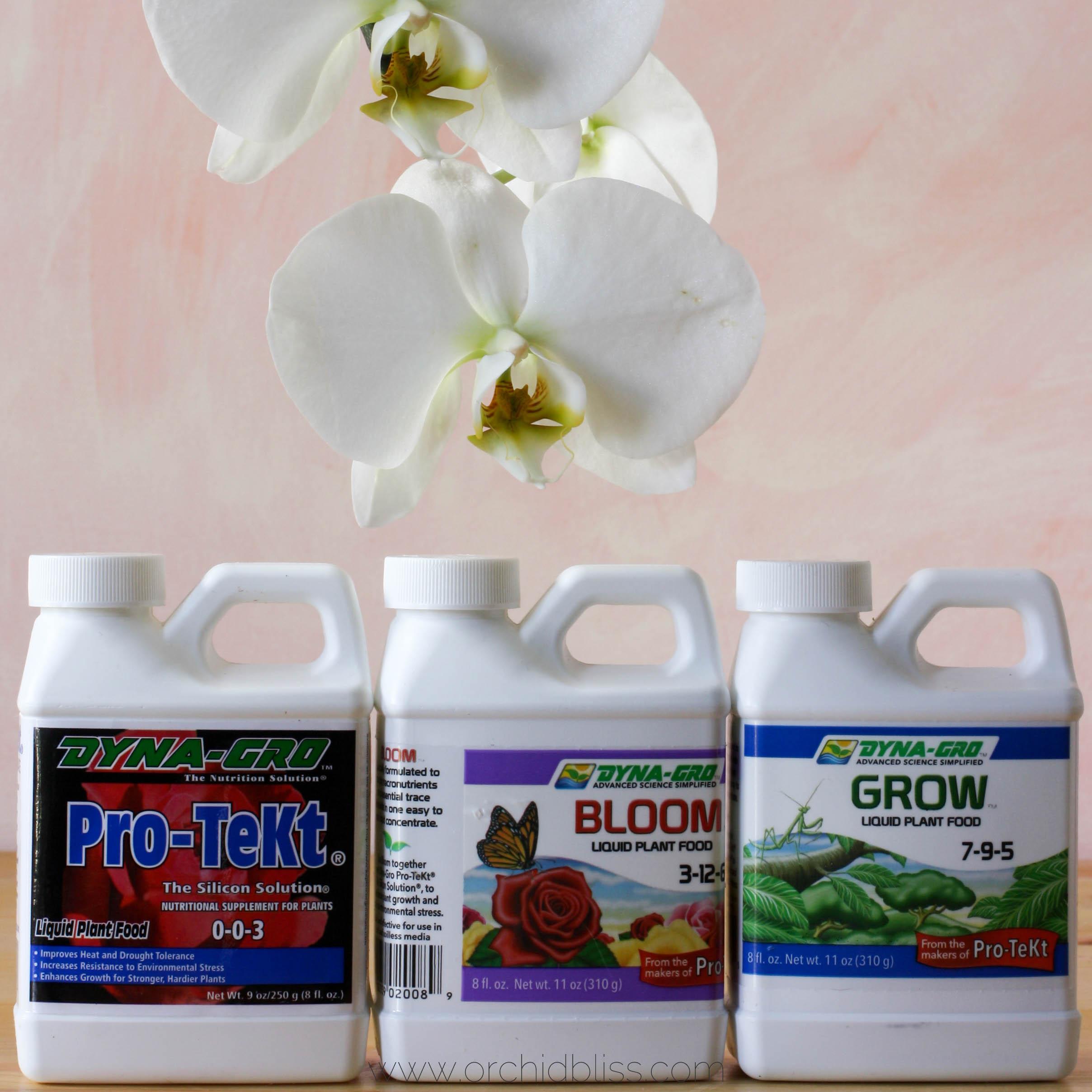 fertilize orchids