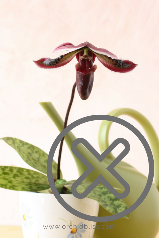 Just for you tips to re bloom orchids orchid bliss How do you care for orchids after they bloom