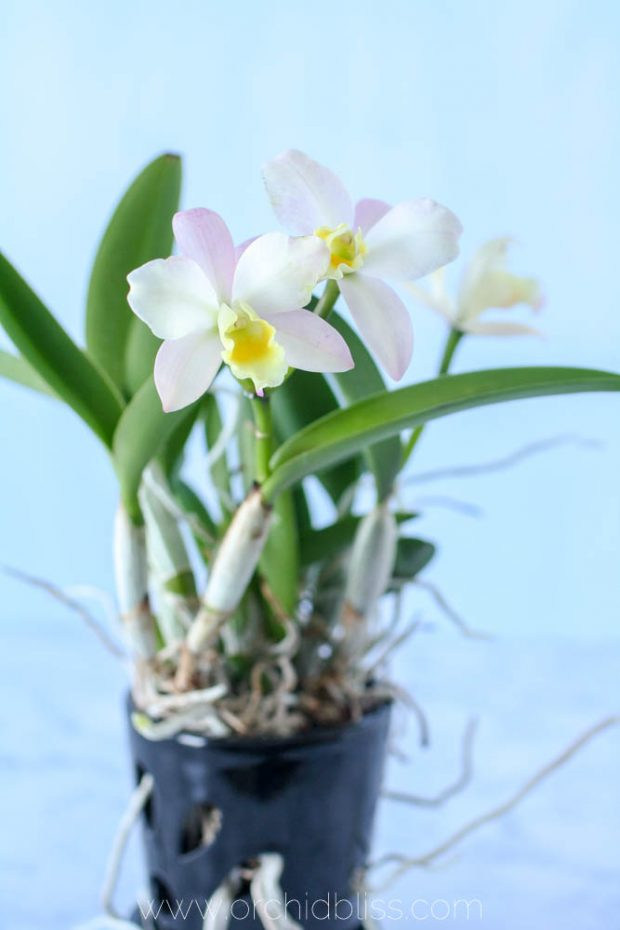 Best Orchid Pots: For Healthier Plants and Prettier ...