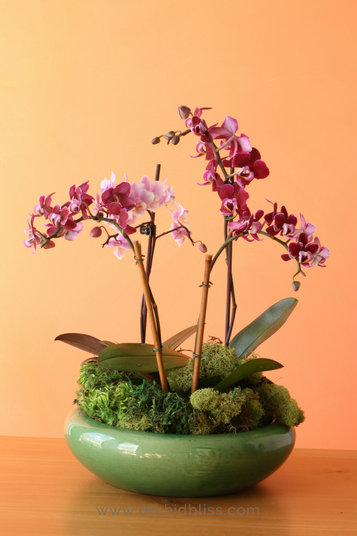 Orchid Pots: For Healthier Plants and Prettier Displays ...