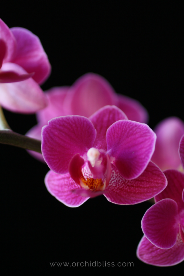 Facts About Orchids Png