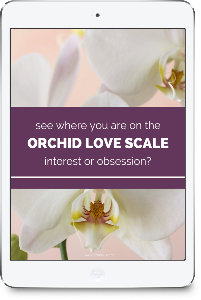 Free Orchid Love Quiz and Tips for Growing Orchids