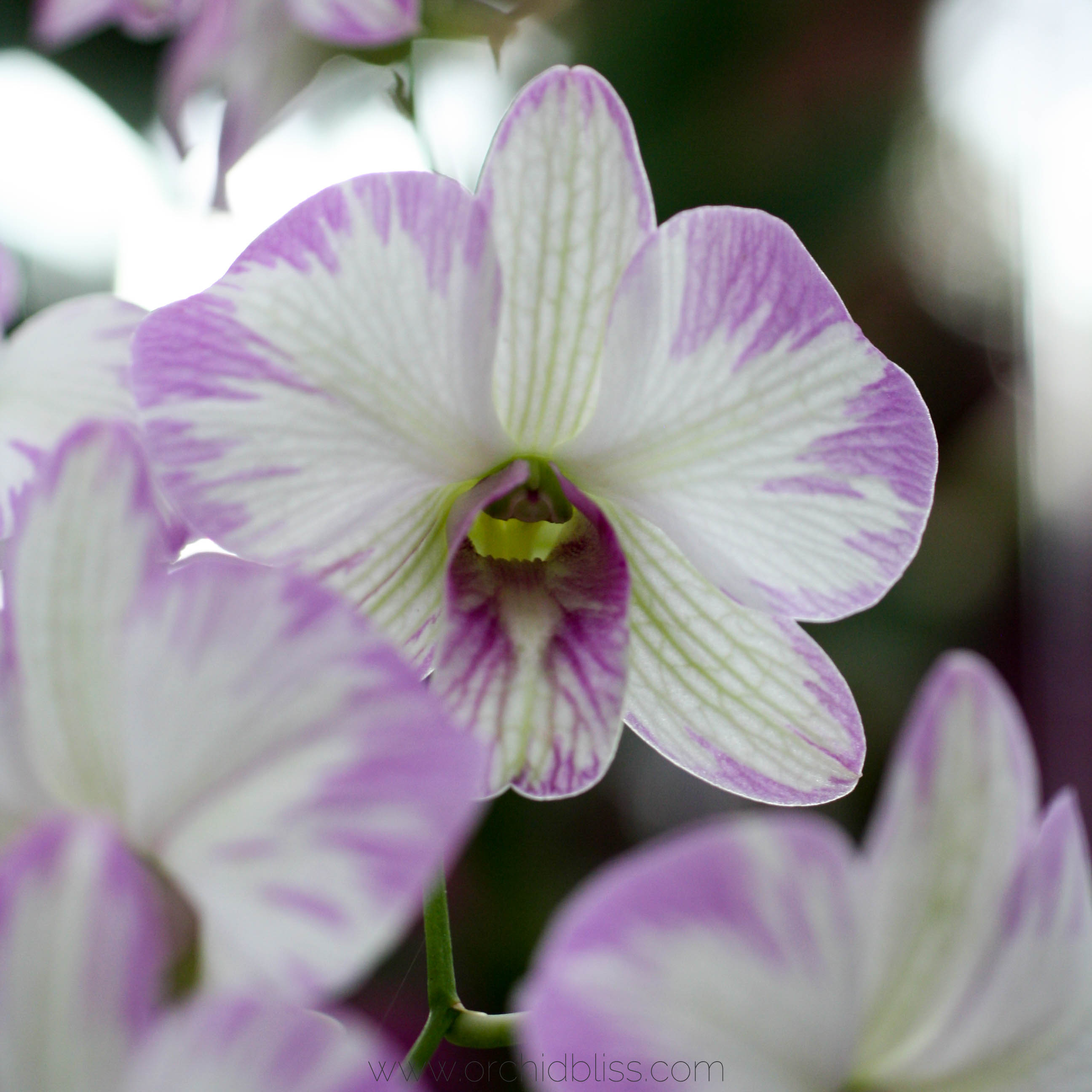 orchid care tips