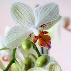 use keiki paste - more flowers