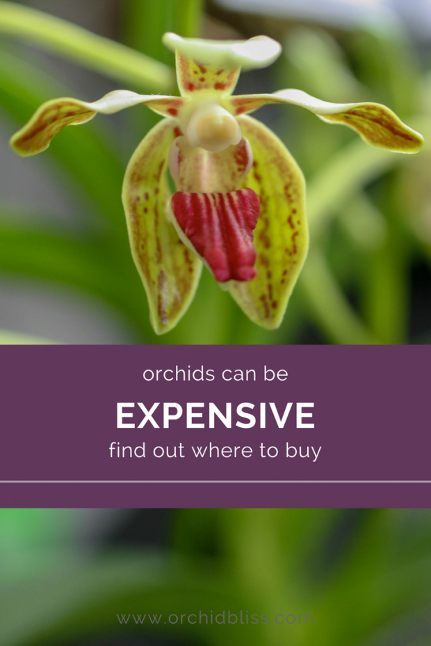 You'll love these sources for orchids that won't break the bank