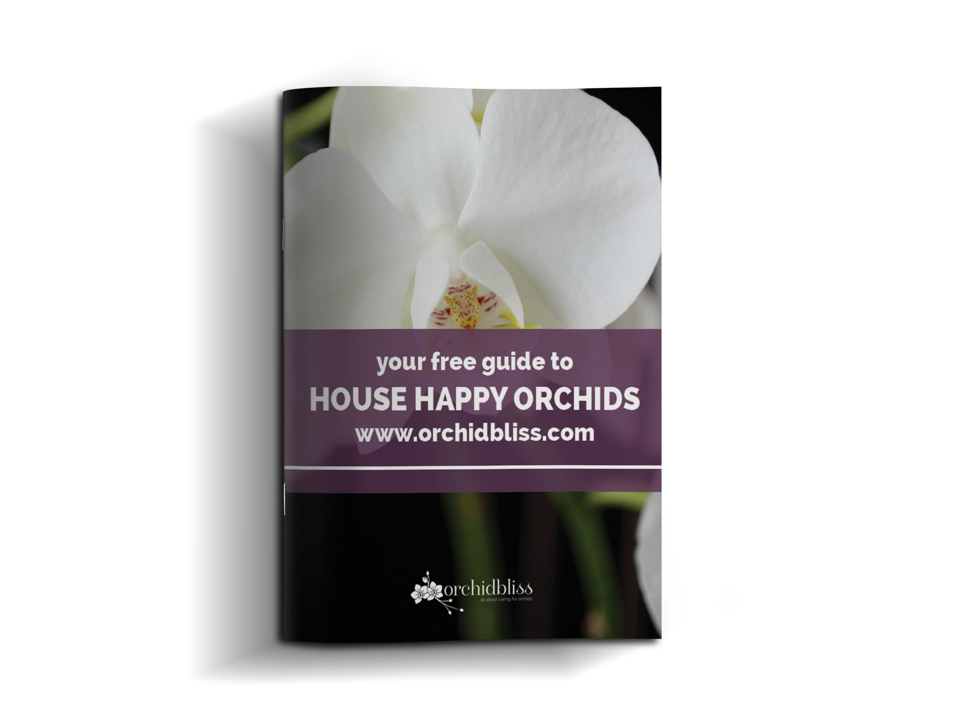 House Happy Orchids Will Thrive In Your Home Orchid Bliss