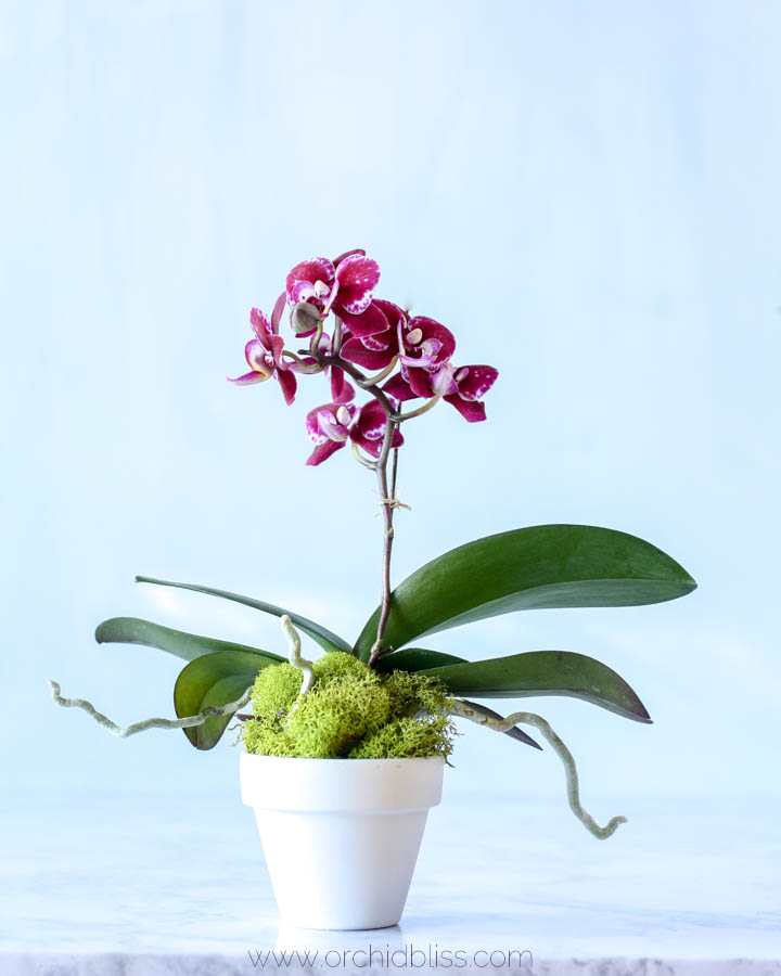 How to safely transport orchids