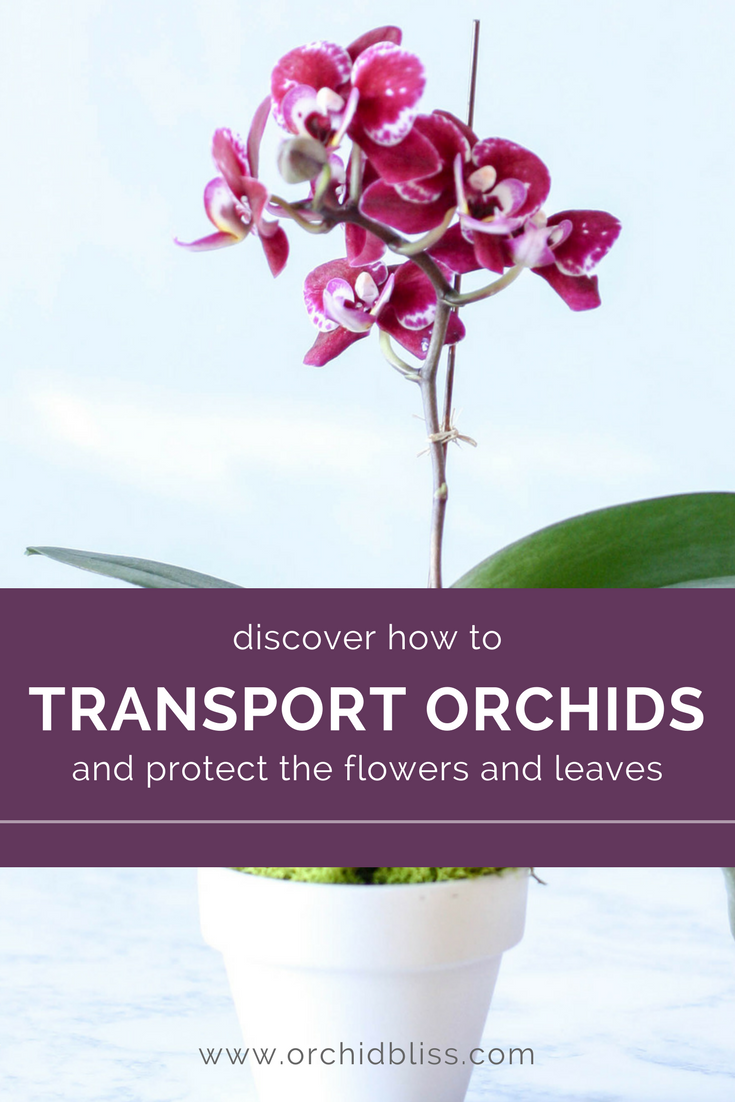 I love these helps for transporting orchids