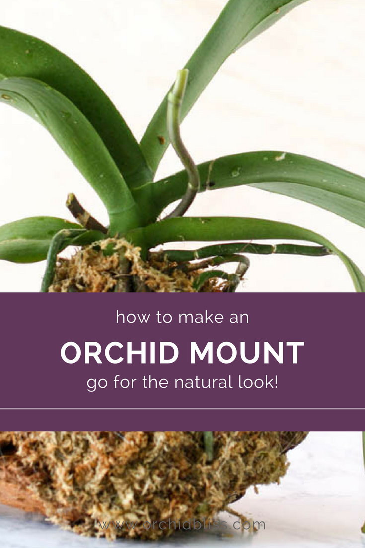 While applying the moss, wind the fishing line over the moss to secure the orchid and the moss to the mount.