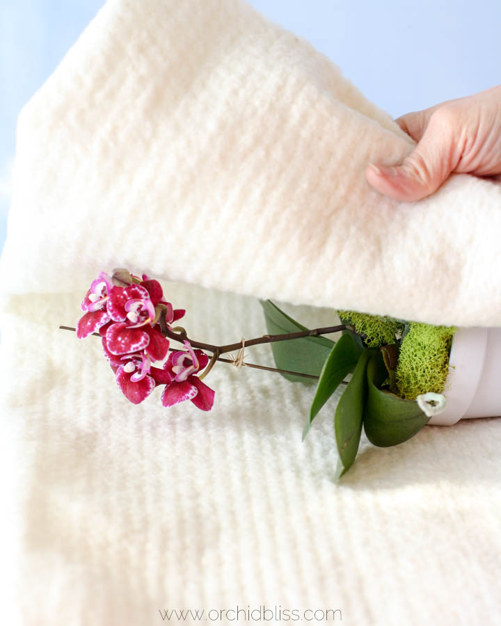 Wrap orchid in cotton batting for safe transport