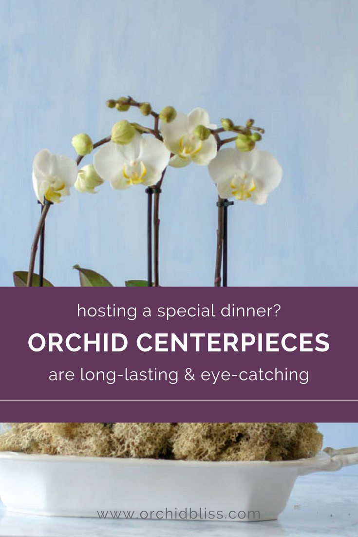 You'll love this guide on creating orchid centerpieces - pratical and beautiful