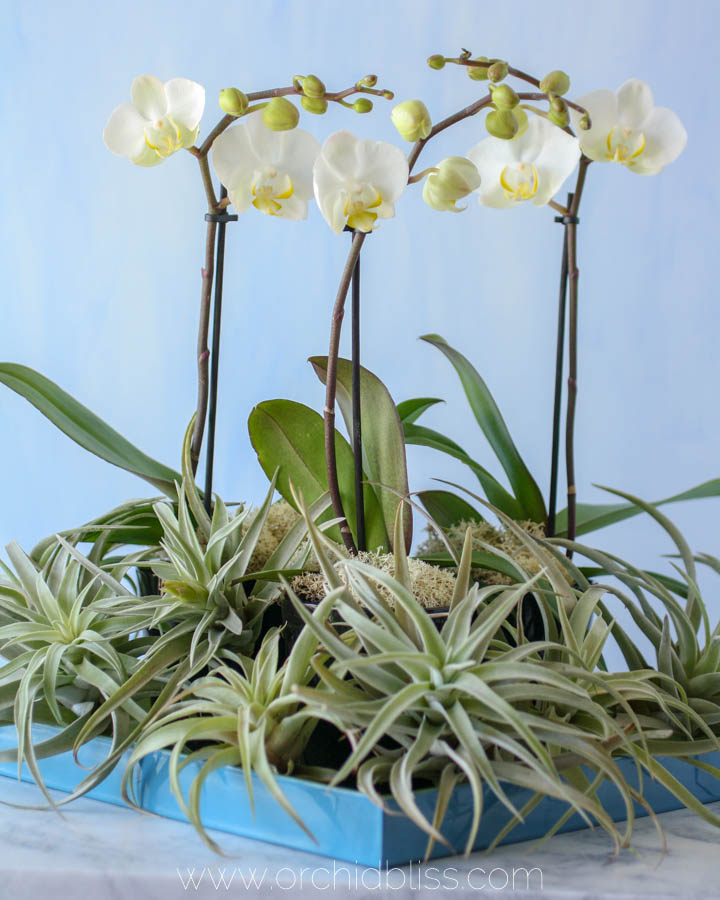 orchids and air plants - centerpieces