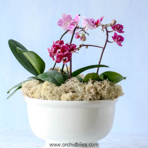 multiple orchids in one pot