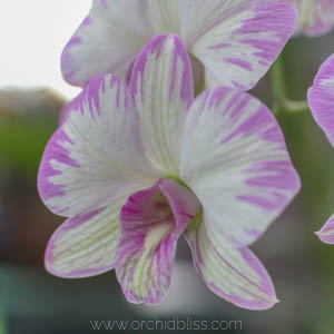Tools to Bloom Orchids